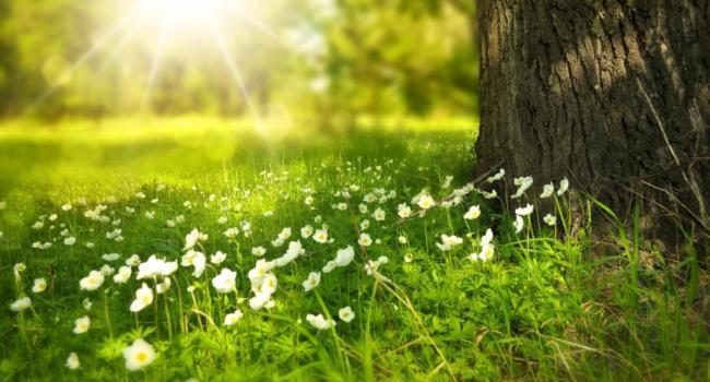 Engagement environnemental : Ai-Cuisine